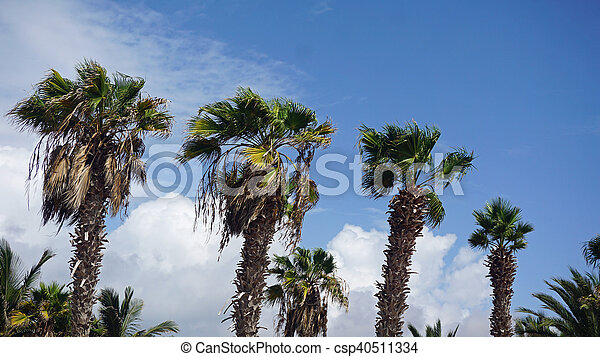 palm tree - csp40511334