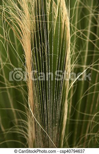 Palm Tree - csp40794637