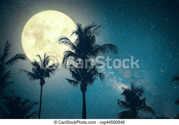palm tree tropical beach with Milky Way star in night skies - csp44590846