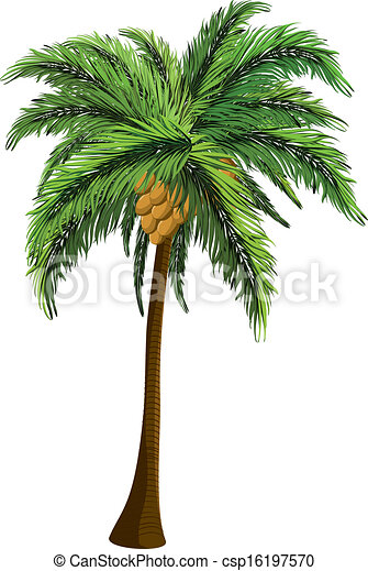 palm tree with coconut tropical coconut palm tree with coconut on rh canstockphoto com coconut tree clipart images coconut tree clipart black and white