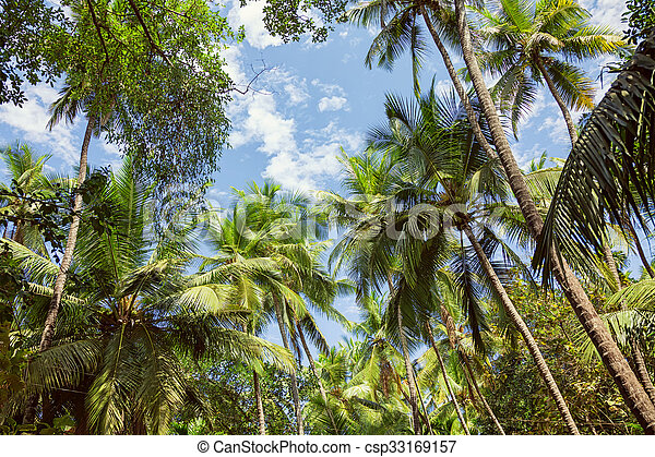 Palm trees against the blue sky - csp33169157