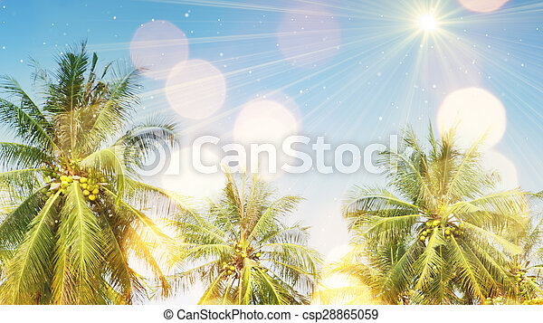 palm trees and sunlight - csp28865059