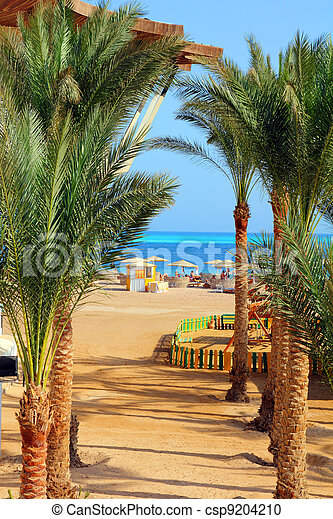 palm trees and tropical beach - csp9204210