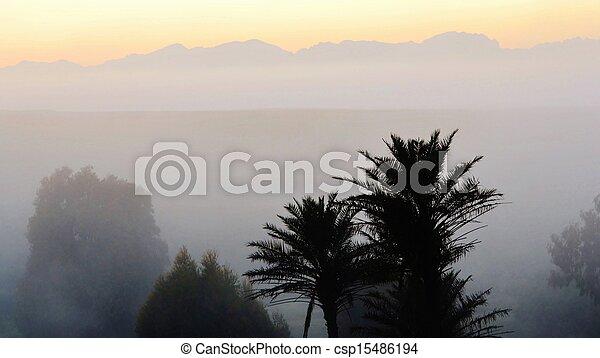 Palm trees at dawn - csp15486194
