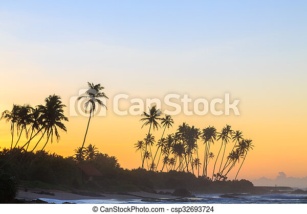 Palm trees at the beach at sunset - csp32693724