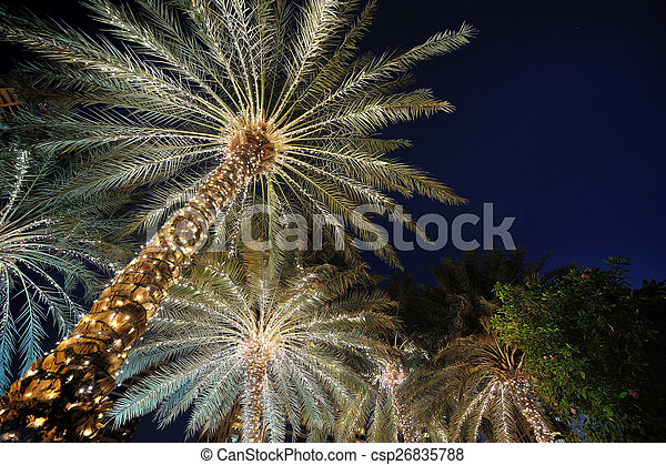 palm trees decorated with christmas garland night csp26835788