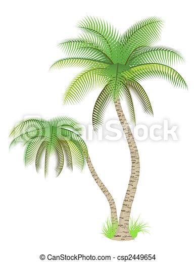 Palm trees - csp2449654