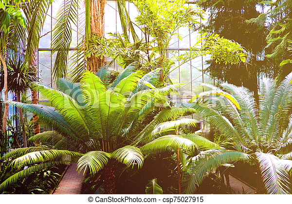 Palm trees in a subtropical Park. Nature. - csp75027915