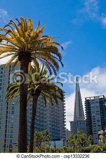 Palm Trees in an Urban Setting with Modern Buildings - San Francisco, CA USA - csp13332236
