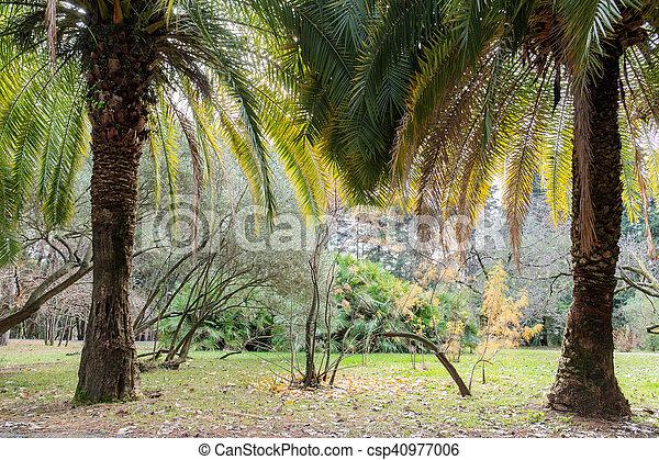 palm trees in autumn - csp40977006