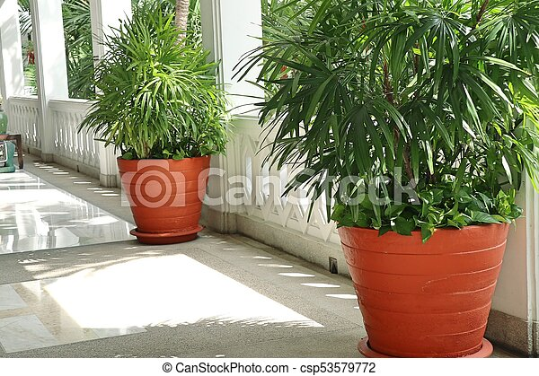 Palm trees in the building - csp53579772
