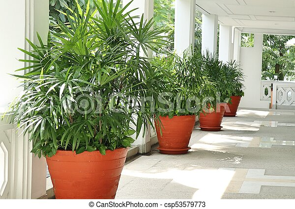 Palm trees in the building - csp53579773