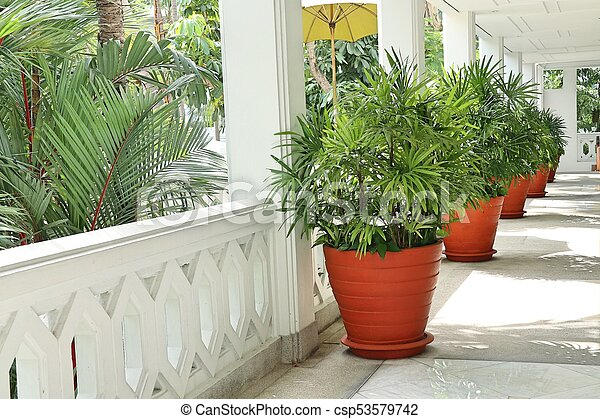 Palm trees in the building - csp53579742