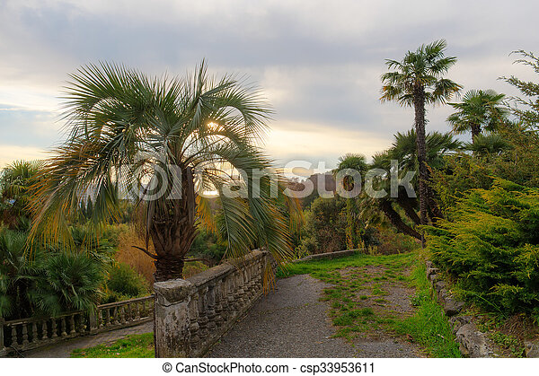 palm trees in the evening - csp33953611