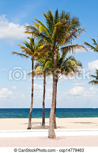 Palm trees in the Fort Lauderdale - csp14779463