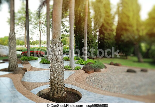 Palm trees in the park pathway - csp59855880