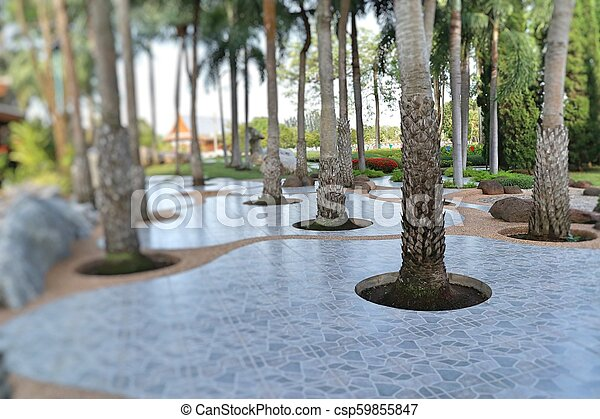 Palm trees in the park pathway - csp59855847