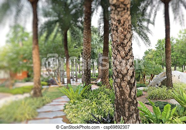 Palm trees in the park pathway - csp69892307