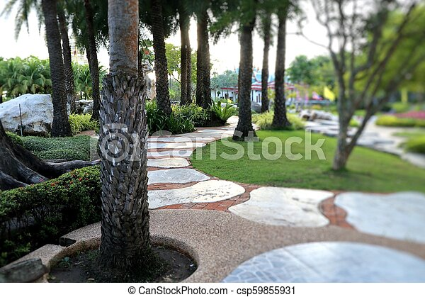 Palm trees in the park pathway - csp59855931