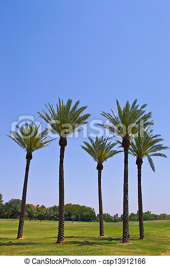 Palm trees in the park - csp13912166