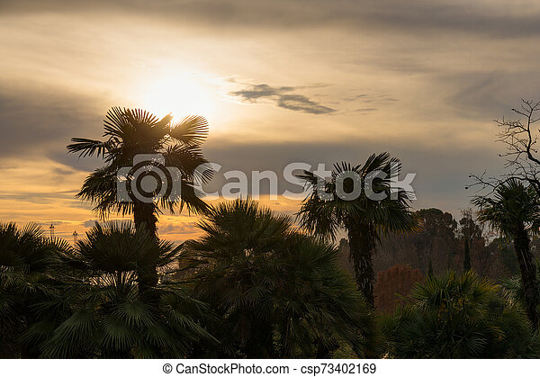 palm trees in the park - csp73402169
