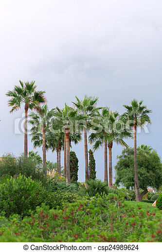 Palm trees in the park. - csp24989624