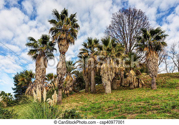 palm trees in the park - csp40977001