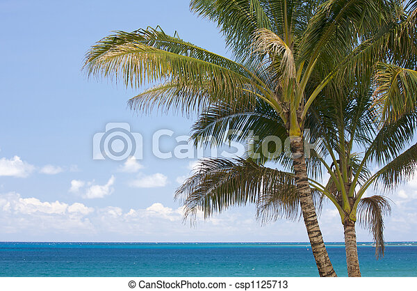 Palm Trees in the Tropics - csp1125713