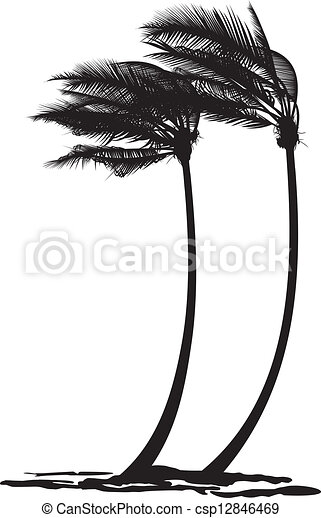 Palm trees in the wind - csp12846469