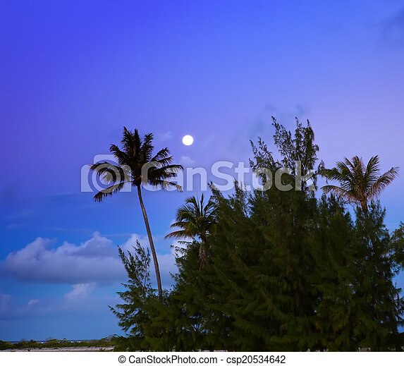 Palm trees on island in the sea. night - csp20534642