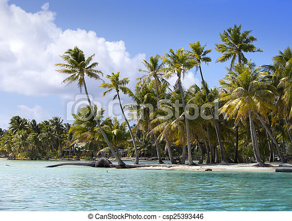 Palm trees on island in the sea - csp25393446