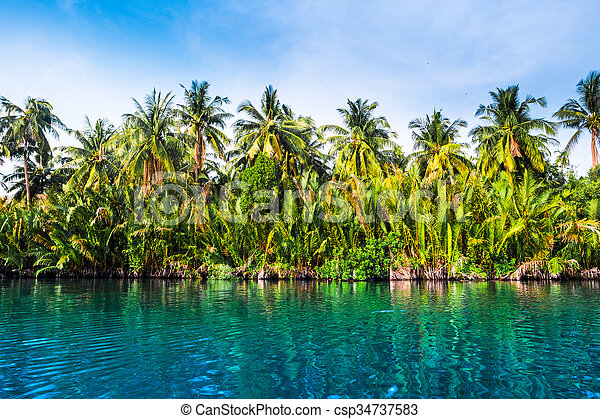 Palm trees on sea shore at beautiful sunny day. - csp34737583