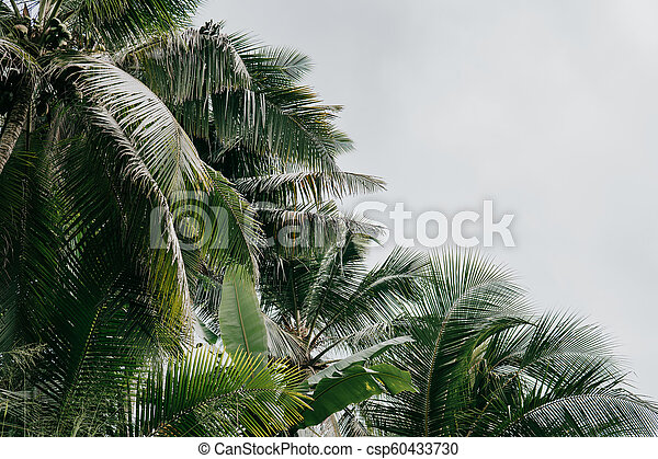 Palm trees on the beautiful sunset background. - csp60433730