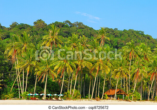 palm trees on the island - csp9725672