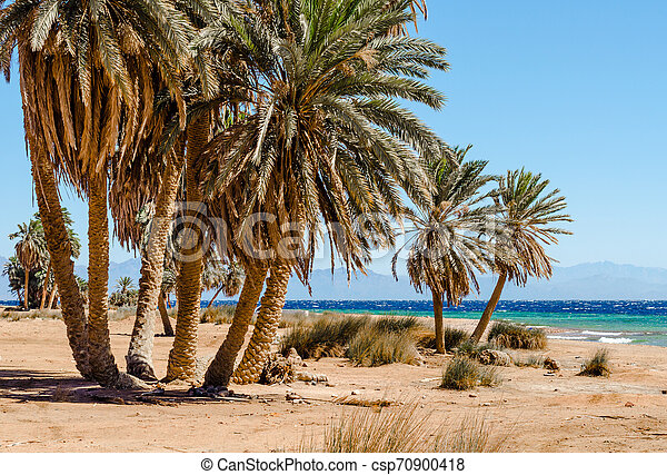 palm trees on the Red Sea in Egypt - csp70900418
