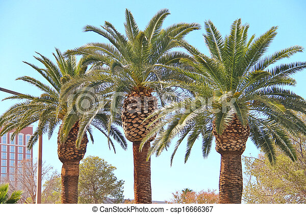 palm trees on the streets of las vegas nevada
