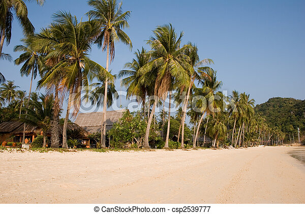 Palm trees on tropical beach - csp2539777