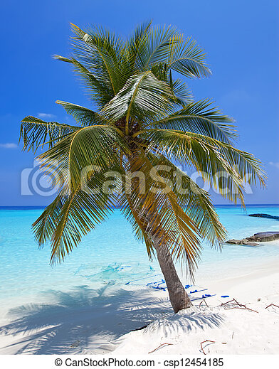 Palm trees on tropical island  - csp12454185