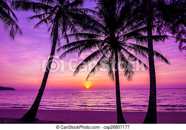Palm trees silhouette at sunset - csp26807177
