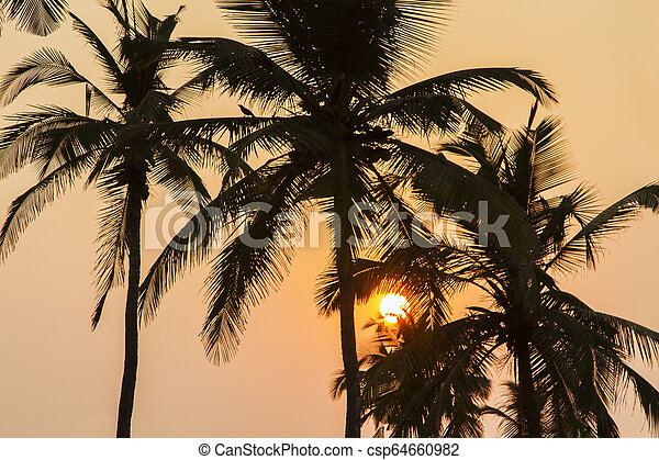 Palm Trees Silhouette At Sunset - csp64660982