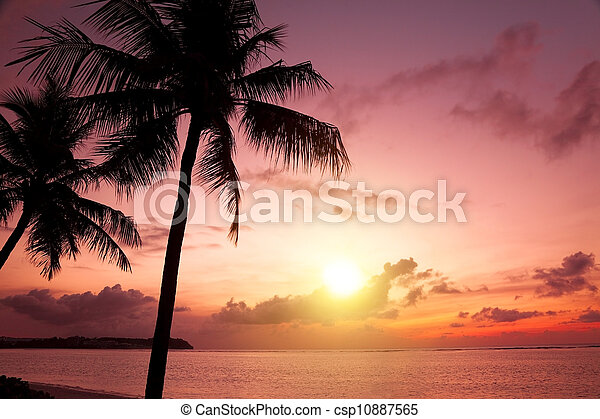Palm Trees Silhouette At Sunset - csp10887565