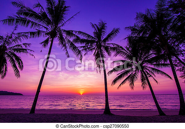 Palm trees silhouette at sunset - csp27090550