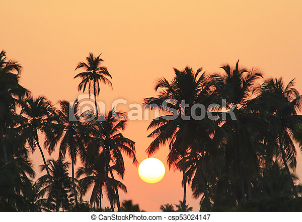 Palm Trees Silhouette At Sunset - csp53024147