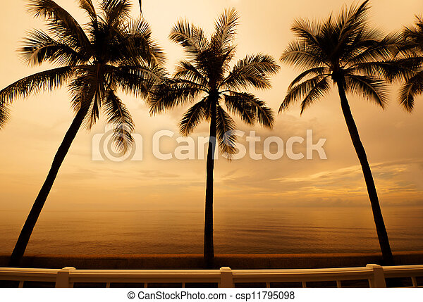 Palm trees silhouette at sunset - csp11795098