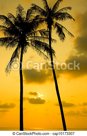 Palm Trees Silhouette At Sunset - csp10173307