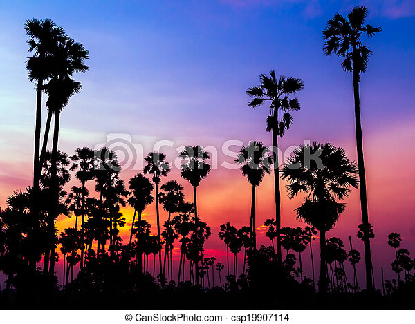 palm trees silhouette on beautiful sunset - csp19907114