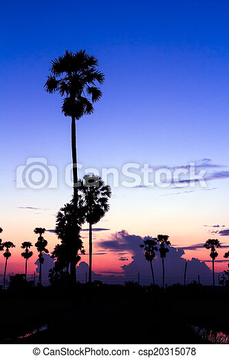 palm trees silhouette on beautiful sunset - csp20315078