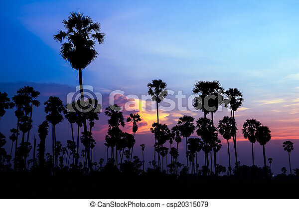 palm trees silhouette on beautiful sunset - csp20315079
