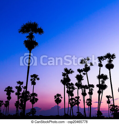 palm trees silhouette on beautiful sunset - csp20465778