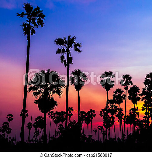 palm trees silhouette on beautiful sunset - csp21588017